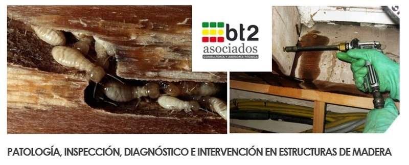 diagnóstico e intervención en estructuras de madera